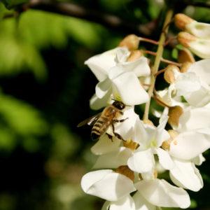Polizza miele: HBW un'altra novità da Area Broker & QZ S.p.A.